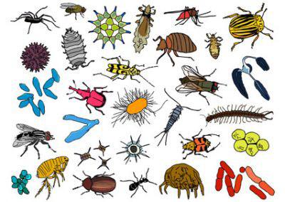 Naturalis Kriebelbeestjes