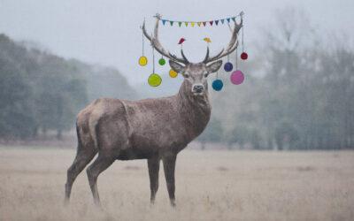 Fijne kerst!